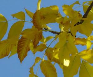 [秋风的颜色 课外阅读]秋风的颜色作文