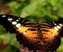 [青虫会变成蝴蝶吗]青虫变成蝴蝶后优秀作文